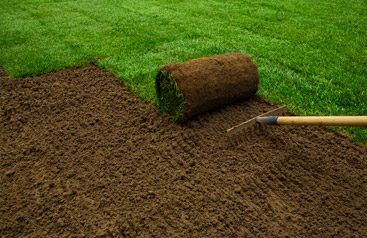 Sod Replacements or New Installations