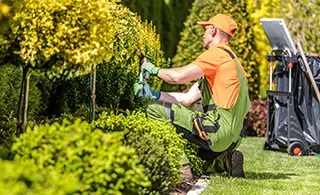7 Questions to Ask a Landscaping Company Before Hiring Them