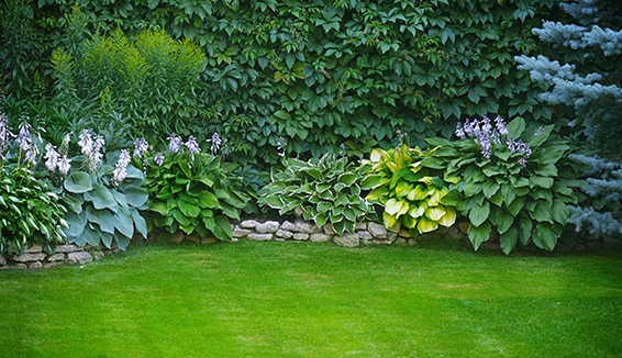 Comprehensive Landscaping Services in Newmarket