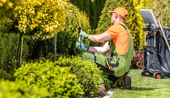 Landscaping Services in Aurora